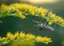 Één Lelijk Insect Royalty-vrije Stock Fotografie