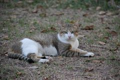Één Mooie Verdwaalde Kat looking royalty-vrije stock afbeeldingen