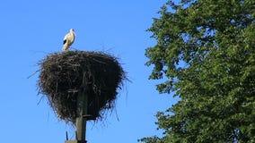 Één ooievaar in het nest op een pool tegen een blauwe hemel stock footage