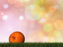 Één oranje 3D fruit - geef terug Royalty-vrije Stock Afbeelding