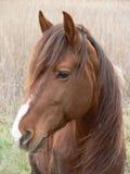 Één Paard Stock Foto