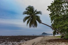 Één palm dichtbij rotsstrand Royalty-vrije Stock Afbeelding