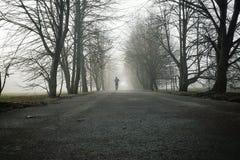 Één persoon die het bos in de mist doornemen royalty-vrije stock foto