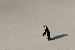 Één pinguïn het lopen Stock Foto's