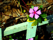 Één purpere bloem royalty-vrije stock fotografie