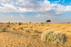 Één rhejriboom in woestijn undet blauwe hemel royalty-vrije stock foto