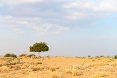 Één rhejriboom in woestijn undet bewolkte hemel Royalty-vrije Stock Foto's