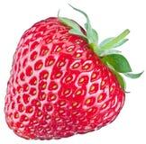 Één rijk aardbeifruit Stock Afbeelding