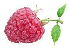 Één rijk die frambozenfruit op een wit wordt geïsoleerd royalty-vrije stock afbeelding