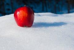 Één rode en gehele appel op de sneeuw stock fotografie