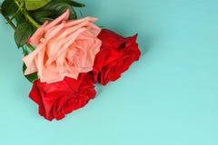 Één roze en twee rode rozen op een blauw close-up als achtergrond Stock Fotografie