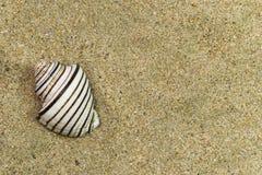 Één shell Stock Fotografie
