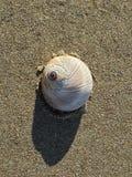 Één shell Stock Foto's