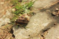 Één slak op een andere in het gras Royalty-vrije Stock Foto's