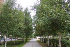 Één steeg in Strezhevoy, het gebied van Tomsk, Rusland royalty-vrije stock foto's