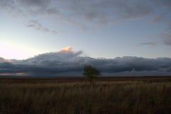 Één struikmidden van de steppe Royalty-vrije Stock Fotografie