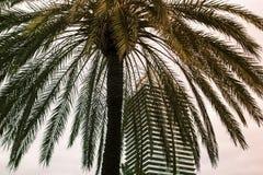 Één tropische palm op de achtergrond van hemel en wolkenkrabber, stock afbeelding
