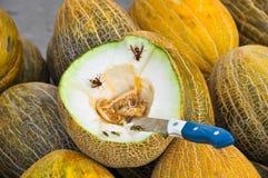 Één van de vele die meloenen in de helft worden gesneden Stock Afbeeldingen