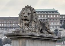 Één van vier leeuwbeeldhouwwerken door Janos Marshako, op einden van de Kettingsbrug, Boedapest, Hongarije stock afbeeldingen