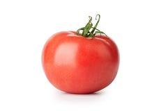 Één verse rode tomaat Stock Afbeelding