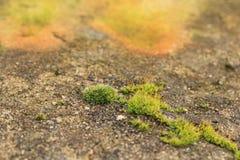 Één vertakt stuk van een groen mos groeit op een steenmuur met een gevoelige textuur - aard vaag ontwerp als achtergrond royalty-vrije stock afbeelding