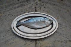 Één vis op een schotel Stock Afbeelding