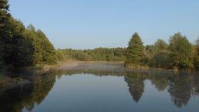 Één vloog over het meer in het bos stock footage