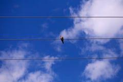 Één vogelzitting op de draad royalty-vrije stock foto