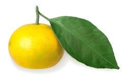 Één volledig fruit van gele mandarijn met groen blad royalty-vrije stock foto