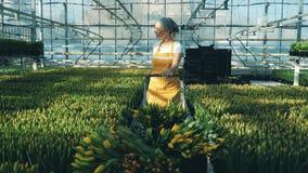 Één vrouw trekt een kar met tulpenboeketten, lopend in een serre stock video