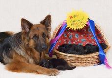 Één week oude puppy! royalty-vrije stock fotografie