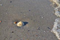 Één witte overzeese shell op het strand Royalty-vrije Stock Foto
