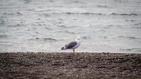 Één zeemeeuw bekijkt op zee een onweer Stock Afbeelding