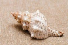 Één zeeschelp op beige textielachtergrond royalty-vrije stock afbeeldingen