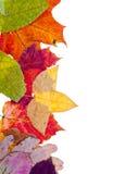 Één zijframe van bonte de herfstbladeren Royalty-vrije Stock Foto's
