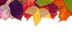 Één zijframe van multicolored de herfstbladeren Stock Foto's