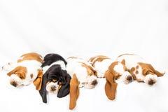 Één zwarte onder de witte puppy royalty-vrije stock afbeeldingen