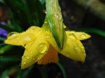 阳光在雨中 库存图片