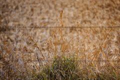 铁丝网篱芭在达拉斯县,衣阿华守卫一片农村农田 免版税图库摄影
