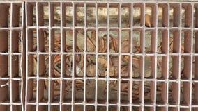 铁排水管盖子 库存图片