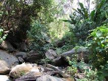 里约国立公园亨利pitier自然和走 免版税库存图片