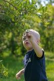 采摘蓝色莓果的小孩男孩 免版税库存照片