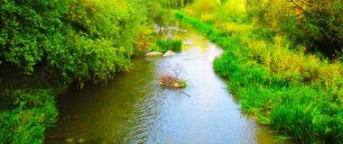 镇静地流动在森林的一条柔和的河 免版税库存照片