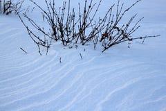雪在用在雪的雪包括的冬天布什 免版税库存照片