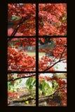 通过一个黑被构筑的paned窗口被观看的俏丽的秋天枫叶-与细平面海绵体和驱动 库存图片