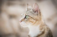 逗人喜爱的家养的小猫 免版税库存照片