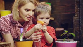 逗人喜爱的儿童男孩帮助他的母亲喜欢植物 植物花 有男孩植物花的妇女 增长的植物和 股票视频