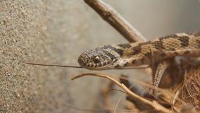 锐化在木头之间的蛇 免版税图库摄影