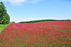 É um campo vermelho. Fotos de Stock Royalty Free