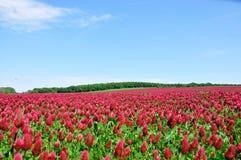 É um campo vermelho. Fotos de Stock